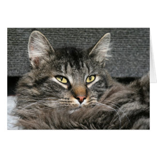 Maine Coon cat face Card