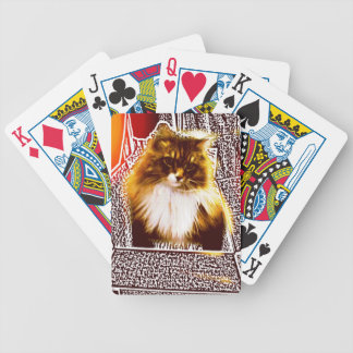 Maine Coon Cat in box Playing Deck of Cards
