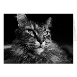 Maine Coon Cat notecard