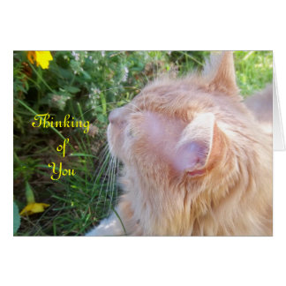 Maine Coon Cat Photo Note Card