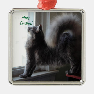 Maine Coon Cat Photo Silver-Colored Square Decoration