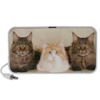 Maine Coon cats doodle speakers