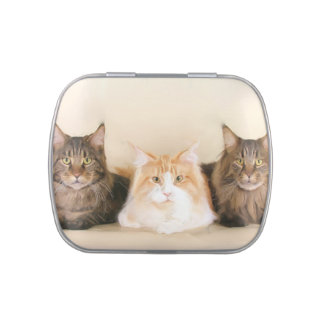 Maine Coon Cats Jelly Belly Candy Tins
