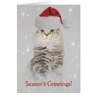Maine Coon Christmas Card