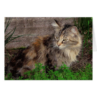Maine Coon Feral Cat Portrait Note Card