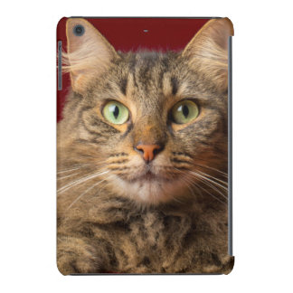 Maine Coon for Christmas with collector iPad Mini Covers
