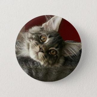 Maine Coon Kitten Badge