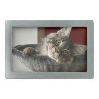 Maine Coon Kitten Belt Buckle