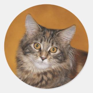 Maine Coon kitten face Round Sticker