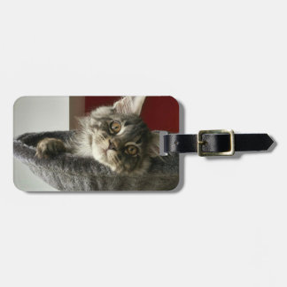 Maine Coon Kitten Luggage Tag