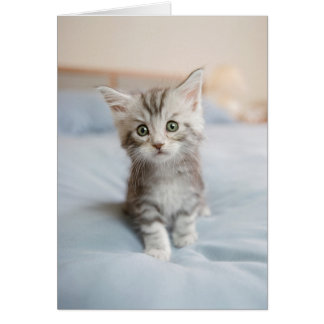 Maine Coon Kitten Sitting On Bed Card