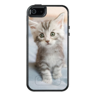 Maine Coon Kitten Sitting On Bed OtterBox iPhone 5/5s/SE Case