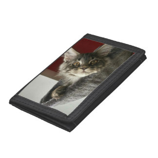 Maine Coon Kitten Wallet