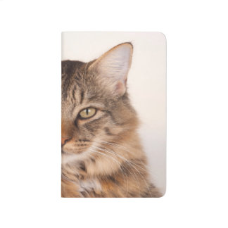 Maine Coon Kitty Journal