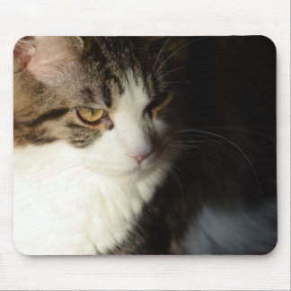 Maine Coon Kitty Mousepad