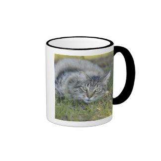 Maine Coon laying in grass, Central Florida. Ringer Mug