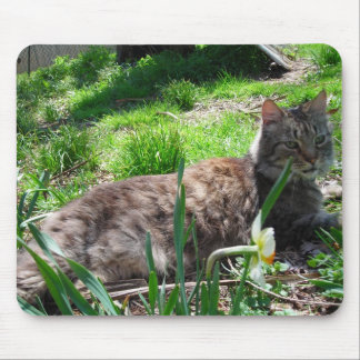 Maine Coon Mouse Pad
