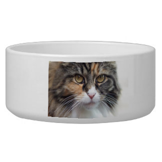Maine Coon pet food bowl
