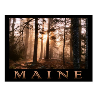 Maine Forest Sunrise Postcard