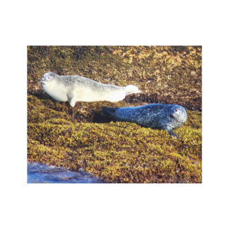 Maine Harbor Seals Boothbay Harbor Wall Wrap Canvas Print