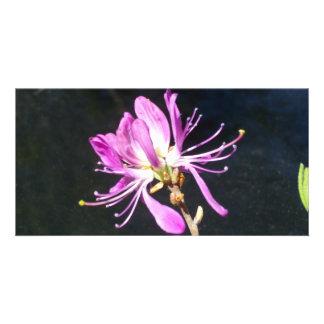 Maine Lambskill Wildflower Notecard Customised Photo Card