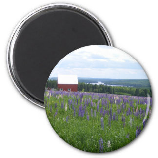 Maine Lupines Field Stockholm, ME Magnet