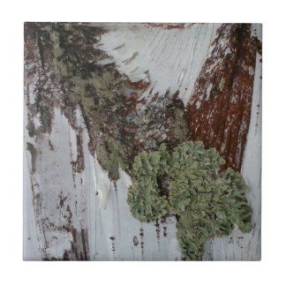 Mainely Birch Ceramic Tile