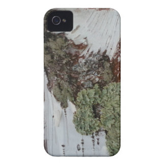 Mainely Birch iPhone 4 Cases