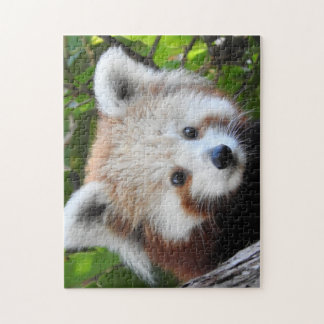 Maiya The Red Panda Jigsaw Puzzle