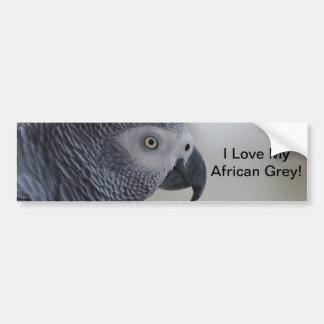 Majestic African Grey Parrot Bumper Sticker