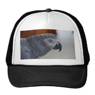 Majestic African Grey Parrot Hat