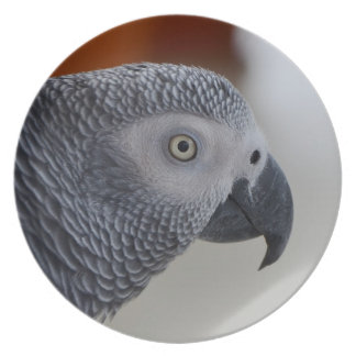 Majestic African Grey Parrot Party Plates