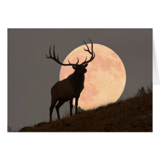 Majestic Bull Elk and Full Moon Rise Card