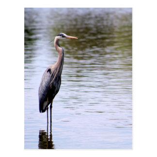 Majestic Crane Postcard