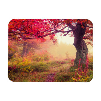 Majestic Landscape With Autumn Trees In Forest Magnet