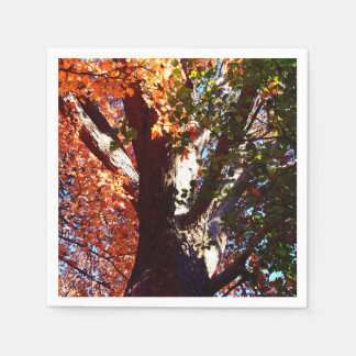 Majestic Maple tree - first signs of Autumn leaves Disposable Napkin
