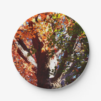 Majestic Maple trees - first view of Autumn trees 7 Inch Paper Plate