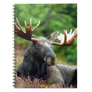Majestic Moose Meadow Spiral Notebooks