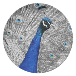 Majestic Peacock Party Plates