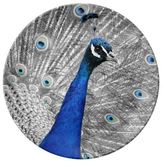 Majestic Peacock Porcelain Plate