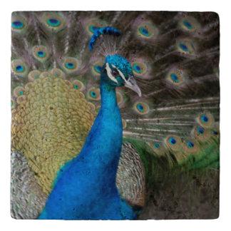 Majestic Peacock Trivet
