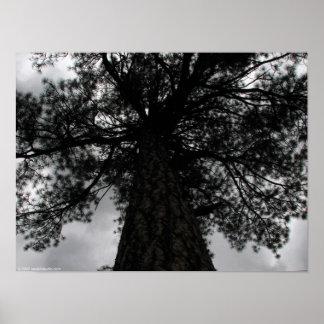 Majestic Pine Poster