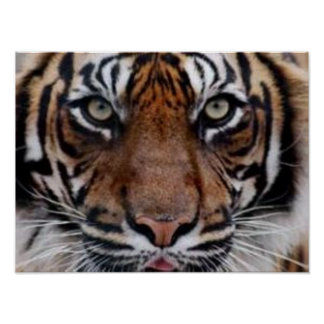 Majestic Tiger Poster