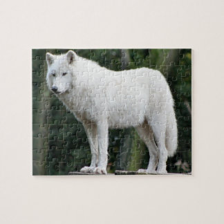 Majestic White Wolf Jigsaw Puzzle