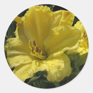Majestic Yellow Daylilies Classic Round Sticker