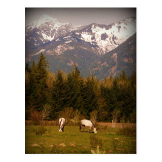 Make a Wish on a White Horse! Postcard