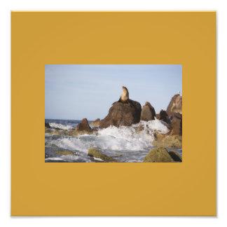 make your own photo prints--OCEAN SCENE