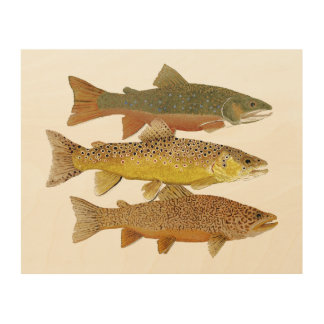 Making a Tiger Trout Wood Canvas Print