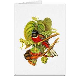 Malabar Trogon Card