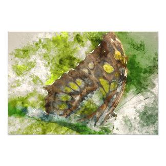 malachit butterfly photo print